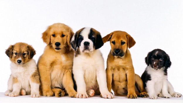 puppy-classes-accademiacinofilafiorentina