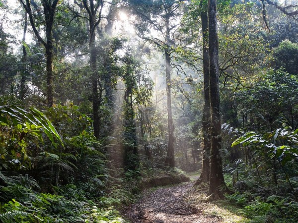 L'incendio dell'Amazzonia: tra fake news e verità