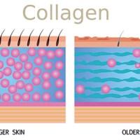 Il Collagene e la Pelle, l'Acqua e la Bellezza