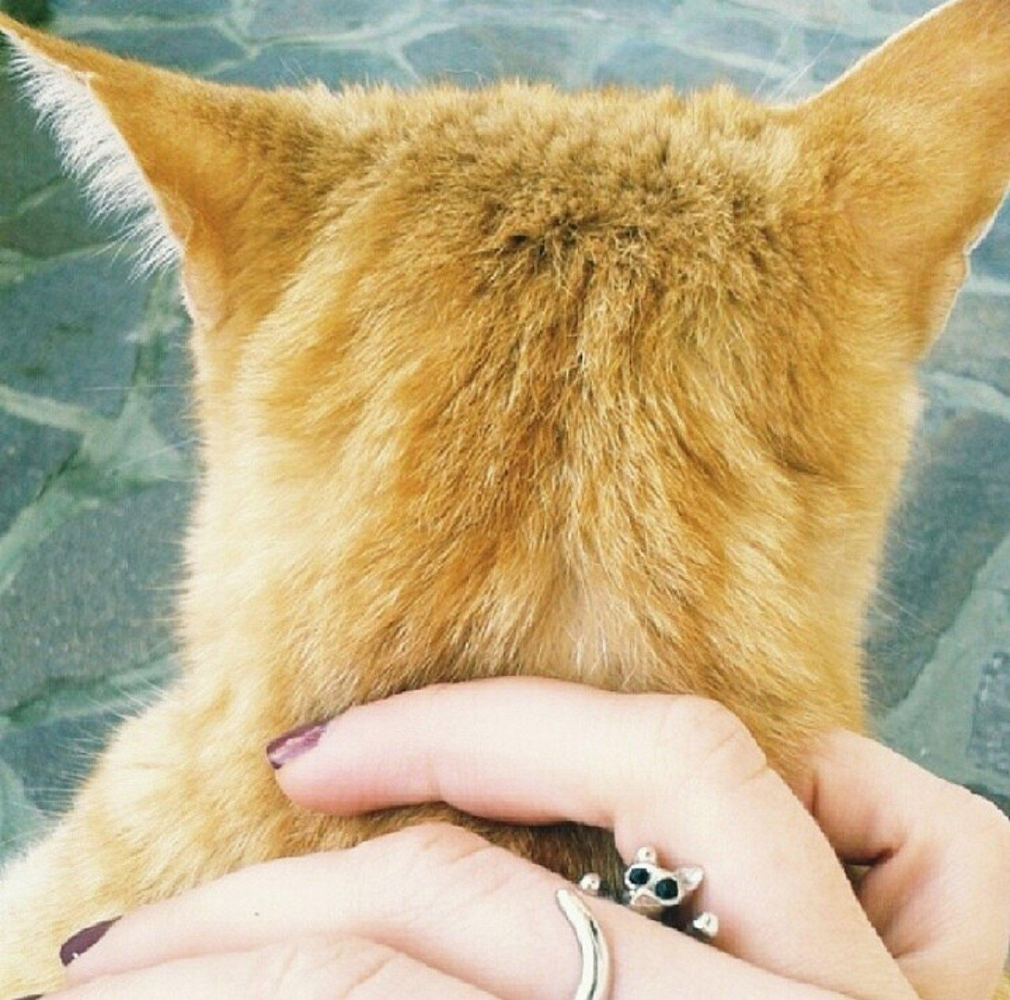 Amabili animali