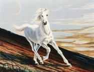 Cavallo - olio su tela 40x50