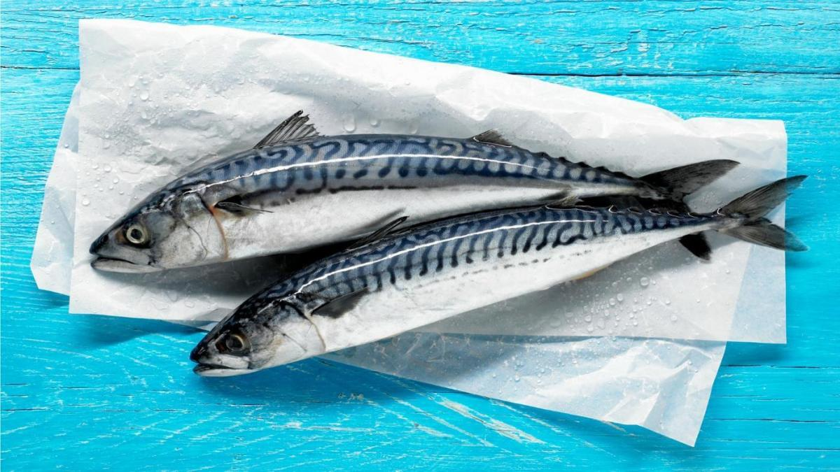 mackerel-season_9528e6559be6a482