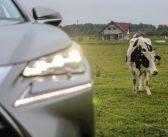 Mihkel Nestori nädalakommentaar: Eesti majandus võtab tuure maha