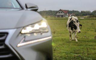eesti autokeel lexus lehm