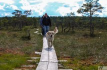 loode-eesti koer matkamine