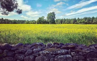 eesti looduse hiite kuvavõistlus