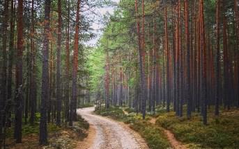 eesti majanduskasv soome indulgents