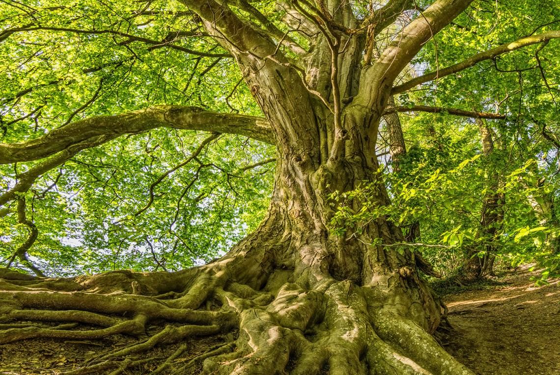 Tree root by Felix Mittermeier on Pexels