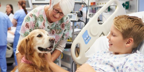 terapia perro