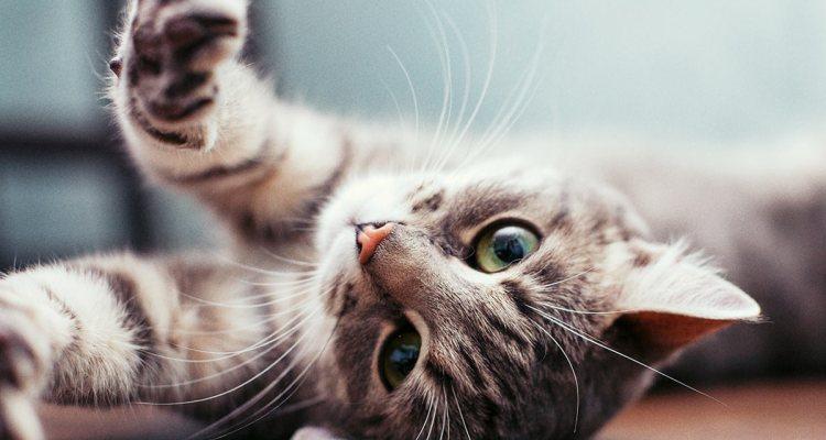 gatos para niños con discapacidad