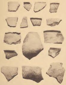 Potsherds of hard, historic Pamunkey ware.