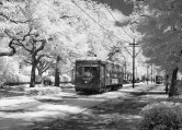 Streetcar, St. Charles Avenue, New Orleans, Louisiana