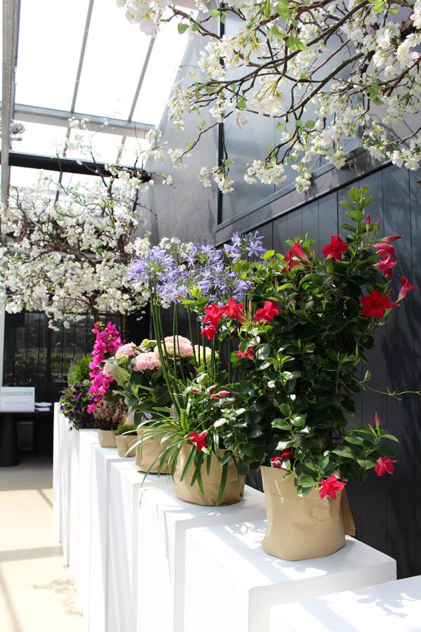 Genomineerde planten voor de balkon- en terrasplant 2018 - via Accessorize your Home