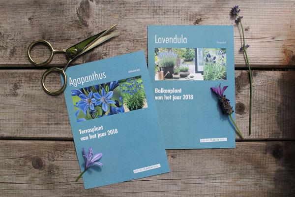 De lavendel en de agapanthus zijn de winnaars van de verkiezing van de balkon-en terrasplant 2018 - via Accessorize your Home