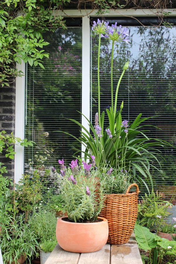 De lavendel en agapanthus op een houten bank in de tuin van Accessorize your Home