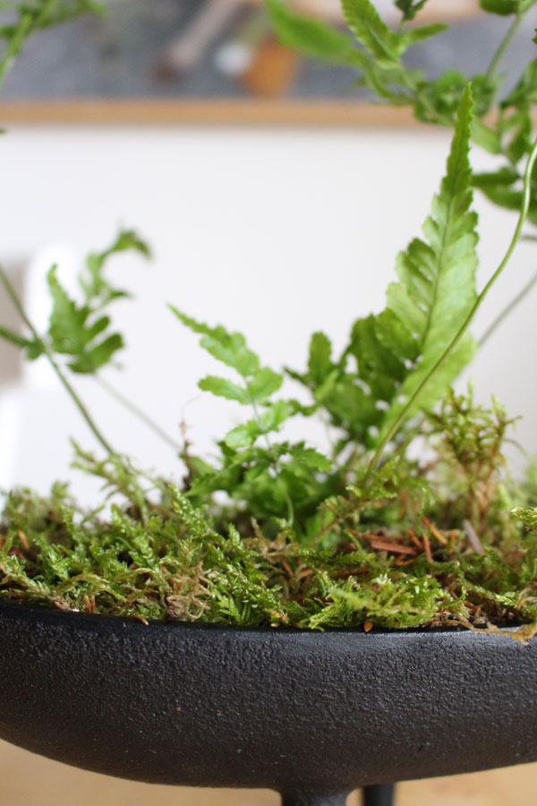 Close up van zwart gietijzeren bloempot met mos en stekje varen - via Accessorize your Home