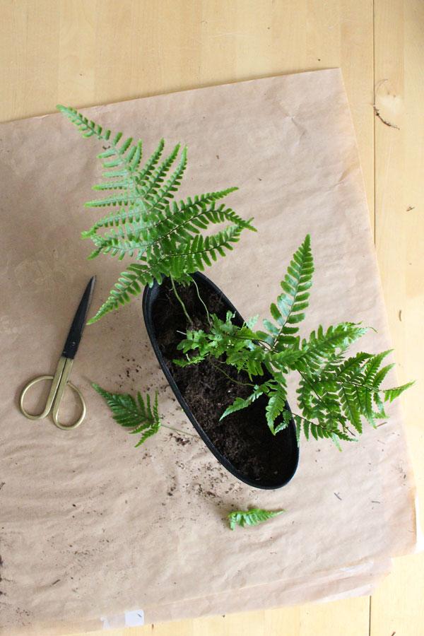 Flatlay van gietijzeren bloempotje met varen stekje en messing/zwarte schaar - via Accessorize your Home