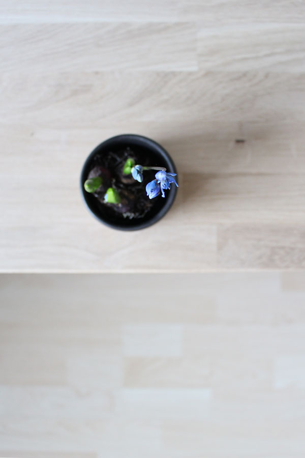 Scilla siberica op houten kastje - via Accessorize your Home