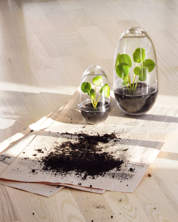 Glazen bol uit twee delen waarin je zaden kunt kweken of kleine plantjes in kunt zetten - via Accessorize your Home