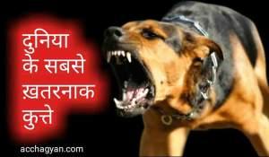 Read more about the article दुनिया के 10 सबसे खतरनाक कुत्ते और उनकी खासियत