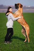 दुनिया के 10 सबसे खतरनाक कुत्ते, most dangerous dogs in the world