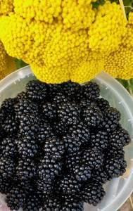 Bucket of wild blackberries beside yellow flowers
