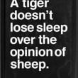 tiger-doesnt-lose-sleep