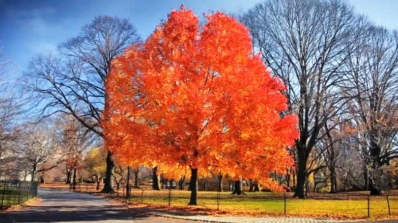 colori autunno - central park new york - natura