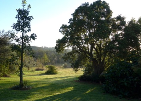 Autumn morning at Wharepuke. View from the deck of your Kerikeri Motel.