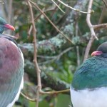 Kerikeri Accommodation birdlife