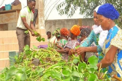 RARE L'or vert - Transformer la jacinthe d'eau envahissante en richesse agricole