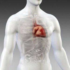 El papel del Aceite de Coco en la enfermedad cardiovascular