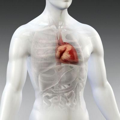 El Aceite de Coco, el colesterol y los triglicéridos