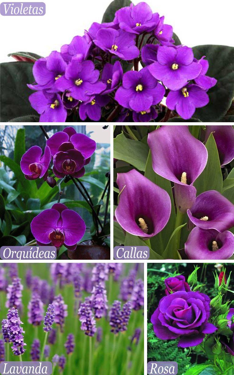 Flores para casamento ultra violet