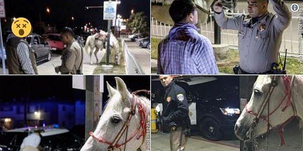 CHP: Drunken man arrested riding horse down 91 Freeway in California