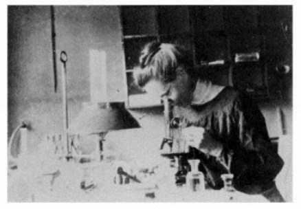 Nettie Stevens en el laboratorio