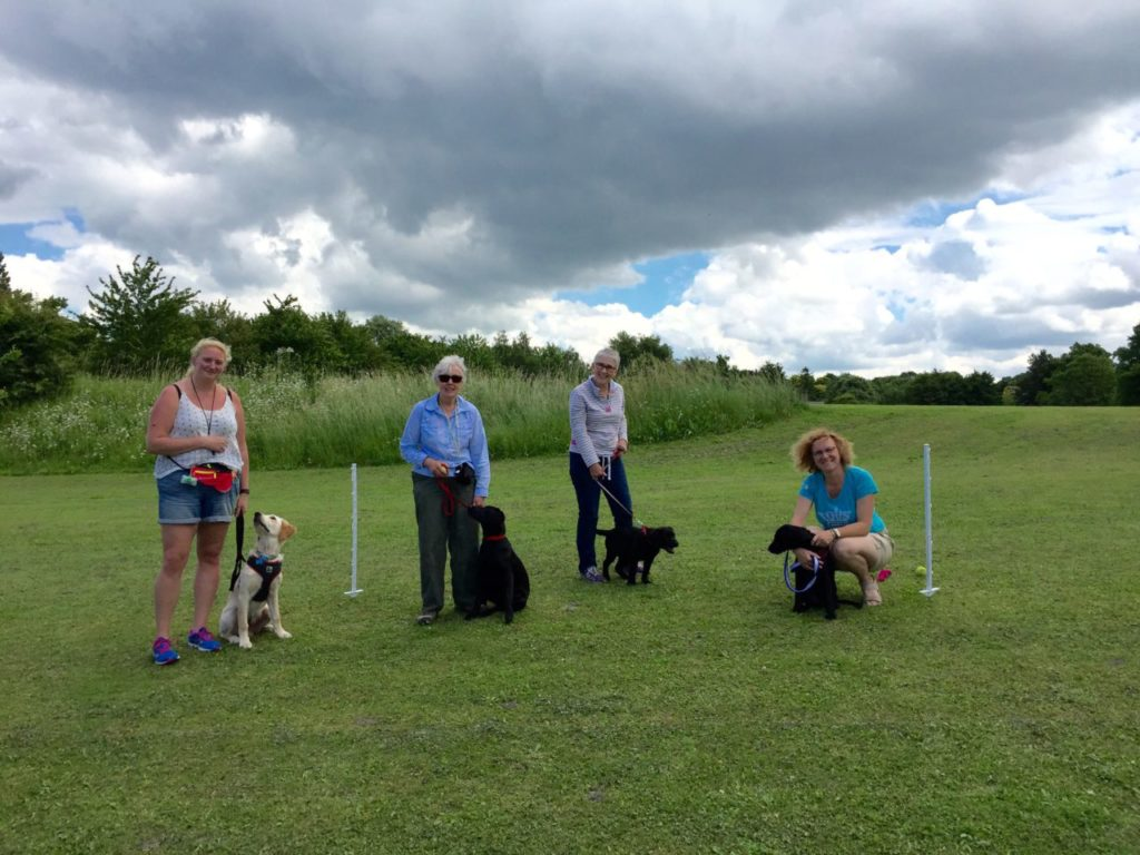 Puppy training class in steeple morden herts beds south cambridgeshire