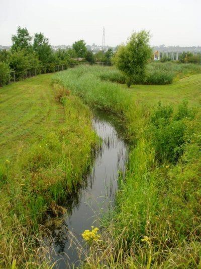 ecology survey south wales