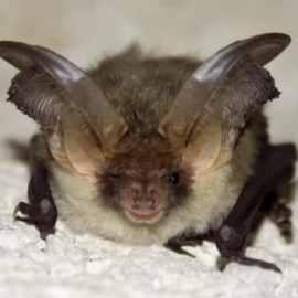 bat survey cardiff