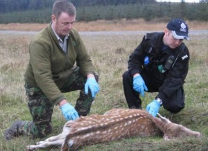 Wildlife Crime Course