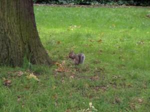 Grey Squirrel Survey