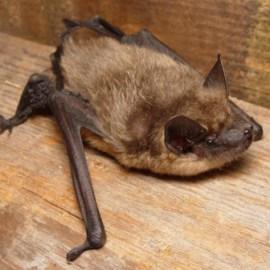 bat survey aberstwyth