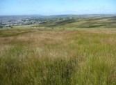 moorland survey