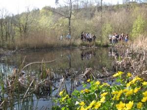 newt survey course