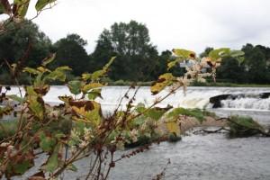 river survey