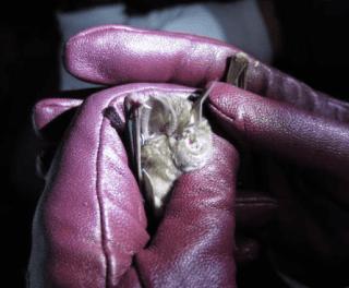 Bat handling