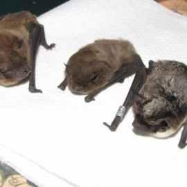 Bat Survey Coleford