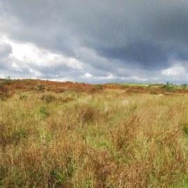 Extended Phase 1 Habitat Survey Exmoor