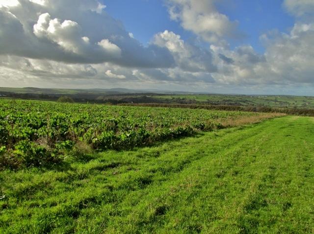 Extended Phase 1 Habitat Survey Gloucestershire