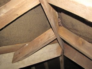 Bats in roof void